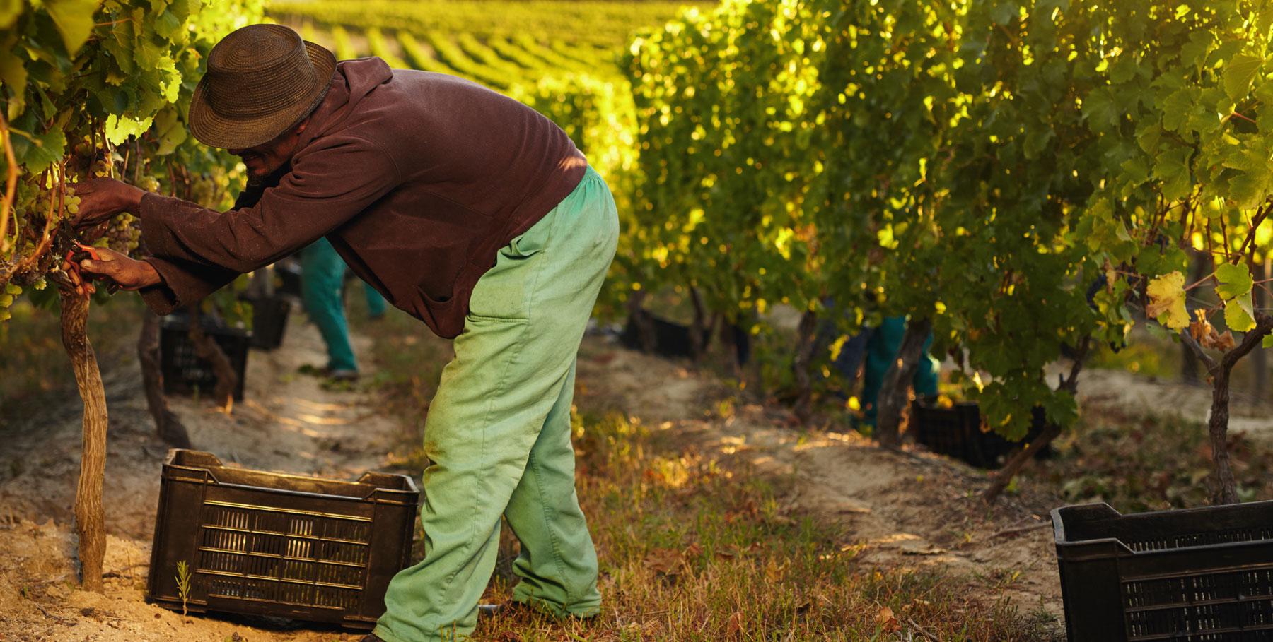 domaine le moulin vins